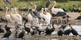 Birding Safaris