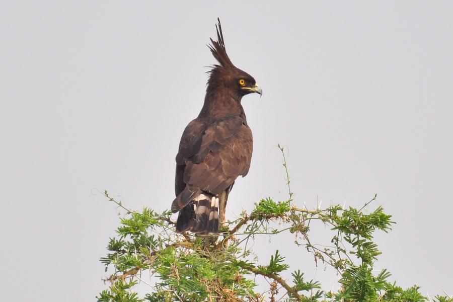 Bird in queen elizabeth national park in kasenyi kazinga channel