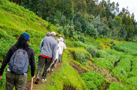 Volcanoes gorilla trekking
