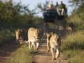 Why Uganda still ranks among the top 10 tourism destinations