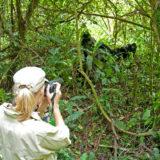 What to do on a Uganda Safari Holiday?