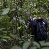 A Guide to Chimpanzee Tracking in Kibale