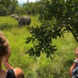Rhino Tracking in Uganda – The Positive side of this Adventure